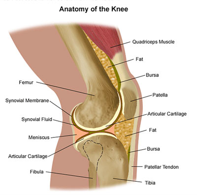 Knee Injury Specialist In Augusta Ga Georgia Clinic Of